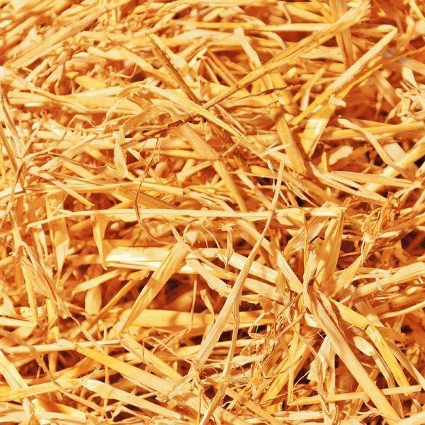 Weizenstroh 5kg ( Ideal als Einstreu oder Futter für Kaninchen, Hasen, Pferde, Meerschweinchen, uvm. oder zur Deko )